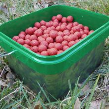 KL Angelsport Red Garlic Boilies 20 mm 3 kg
